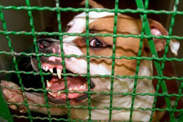 Führerschein für Hundehalter