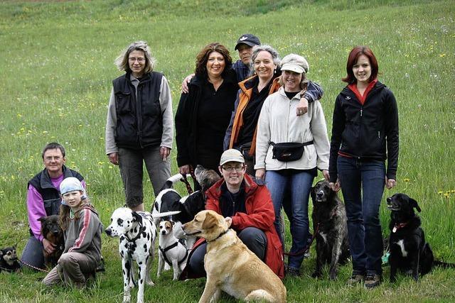 Hundewetter und Hundesport