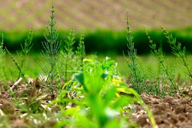 Der Boden fließt den Maisbauern davon
