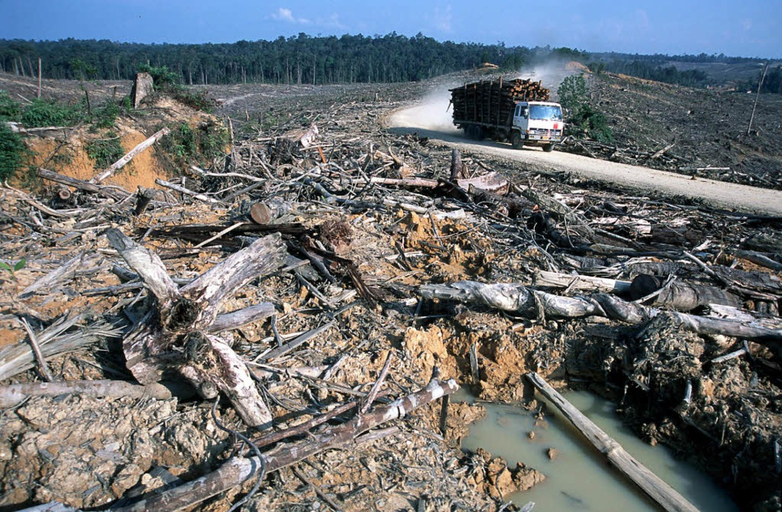 Abgeholzter Regenwald auf Sumatra. Das...chutzorganisation WWF veröffentlicht.   | Foto: dpa