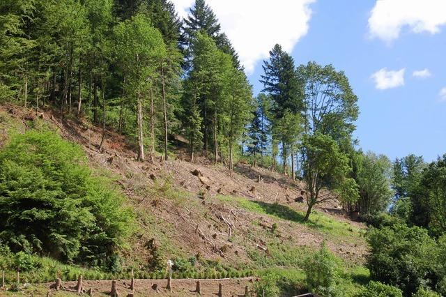 200 Hektar Gebüsch zum Verheizen
