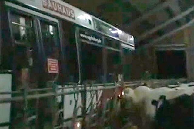 So kommt ein VAG-Bus durch den Kuhstall