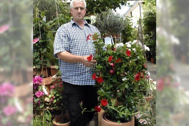 Kübelpflanzen regelmäßig düngen