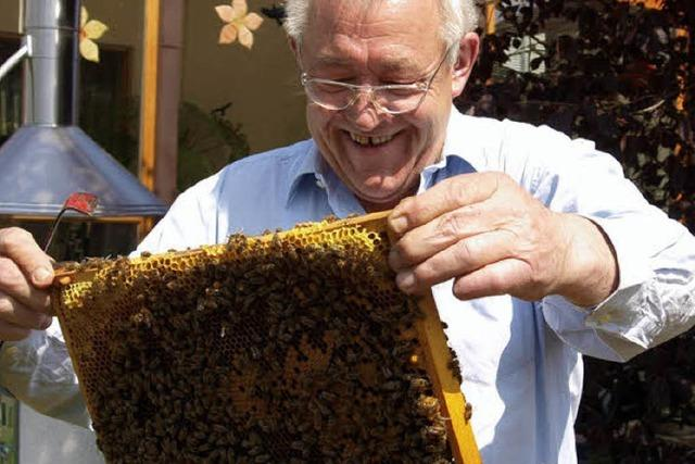 Bienen versüßen das Leben