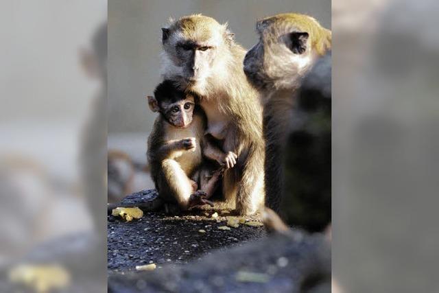 Neues Domizil für die Affenhorde
