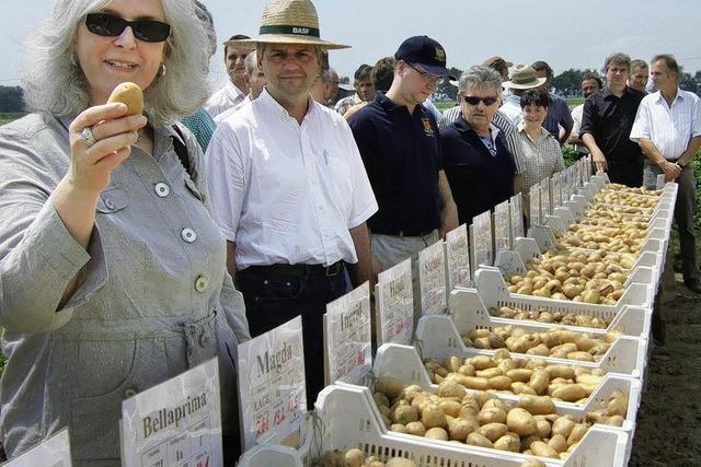 Handel wünscht festschalige Kartoffeln