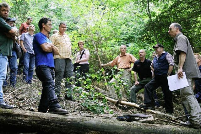 Einblick in Waldwirtschaft