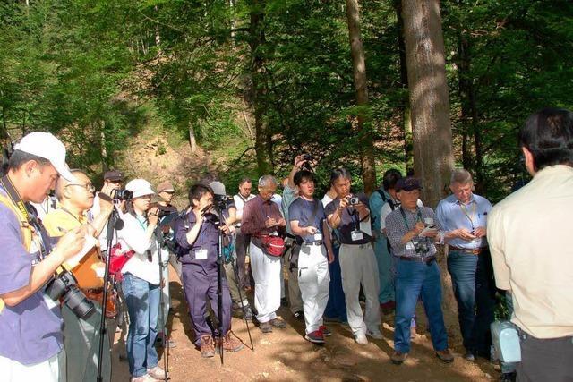 Japaner lernen die Holzernte am Steilhang