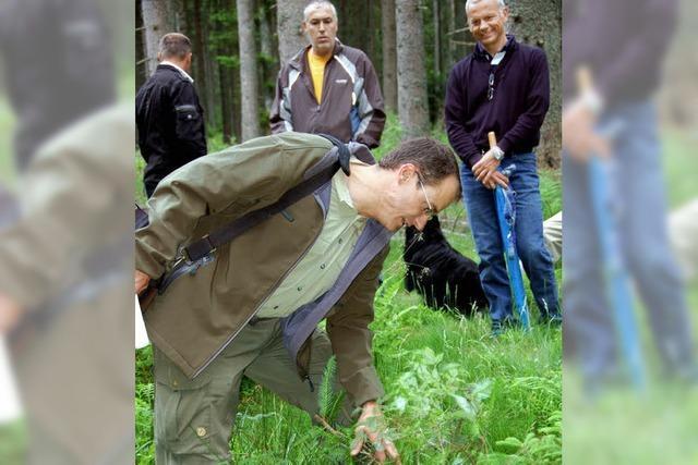 Ein Wald, der Gewinn bringen soll, braucht Pflege