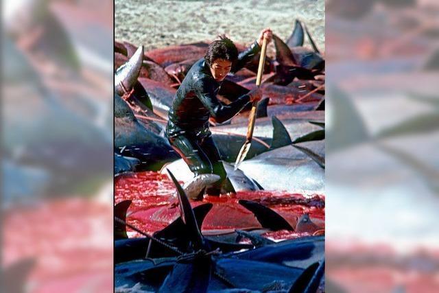 Wer hilft den Delfinen?