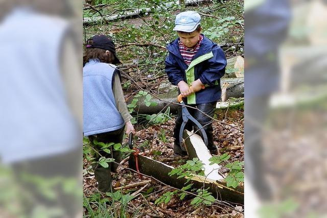 Ranunkel trifft Forstgruppe