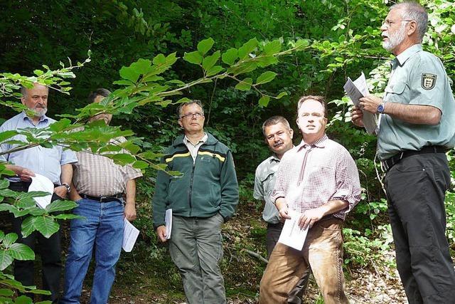 Lothar hat den Forst gezeichnet