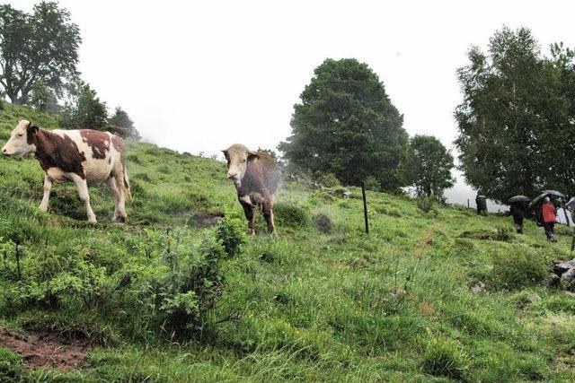 Die Experten und das liebe Vieh