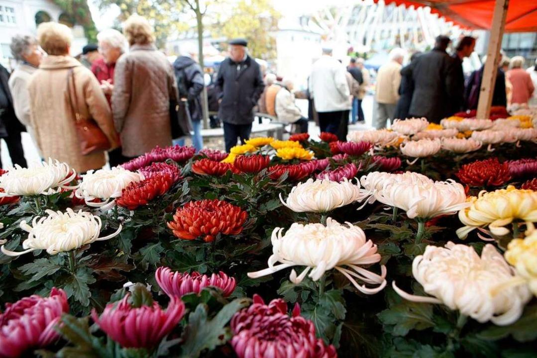 Bilder von der Chrysanthema 2010.  | Foto: breithaupt