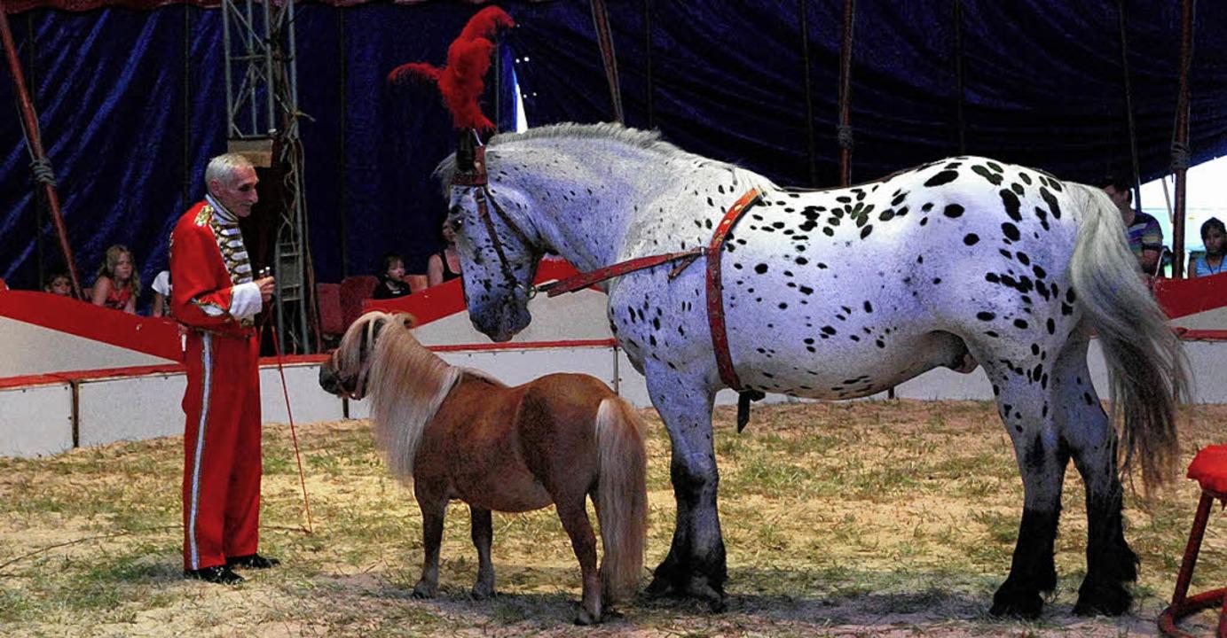 Schön anzusehen war auch die Pferdedressur des Zirkusdirektors  | Foto: Edgar Steinfelder