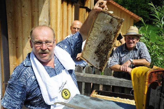 Honig frisch aus der Wabe