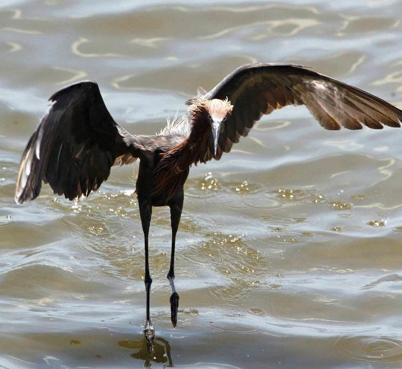 Können Wildvögel wie dieser Reiher überleben?    Foto: dpa
