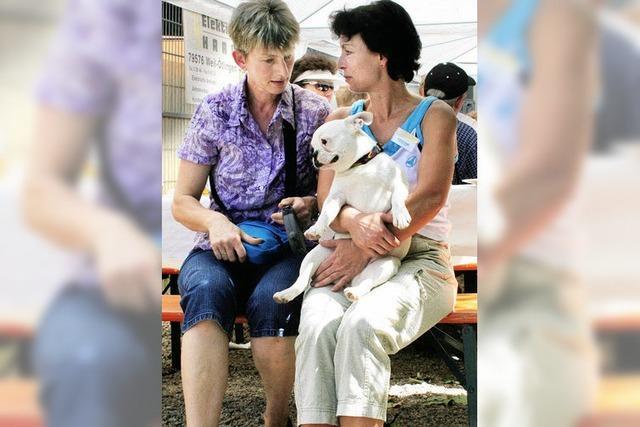 Paolini-Tierheim sagt dem Handel mit Billigwelpen den Kampf an