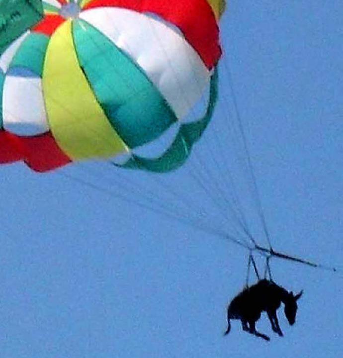 Einige Urlauber hielten den Esel für e...Hund, so hoch schwebte das arme Tier.   | Foto: AFP