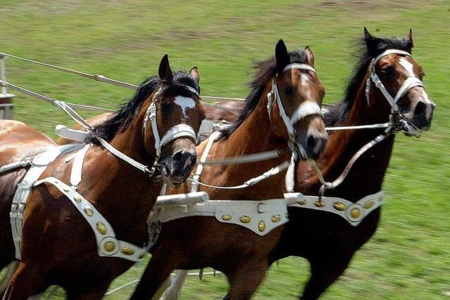 In Offenburg riecht es nach Pferd – die Eurocheval läuft