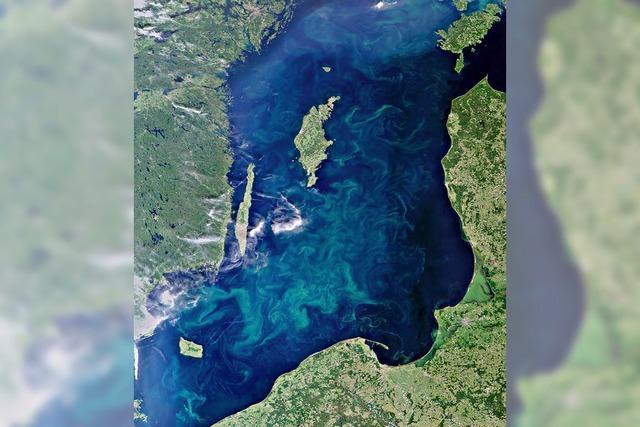 Riesiger Teppich aus Blaualgen in der Ostsee