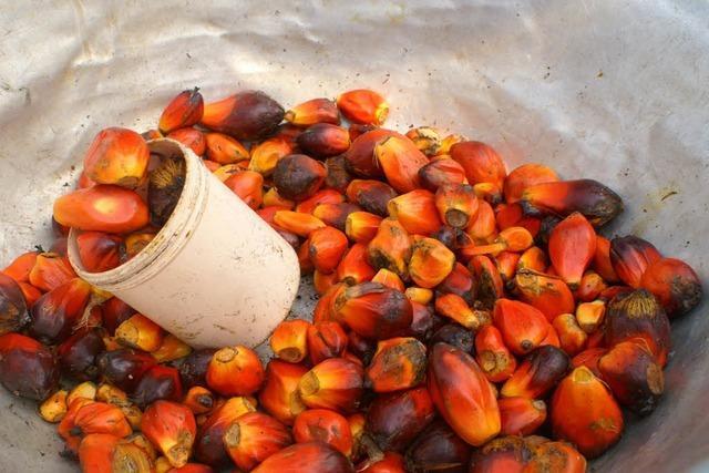 Schmutziges Palmöl in deutschen Bioläden
