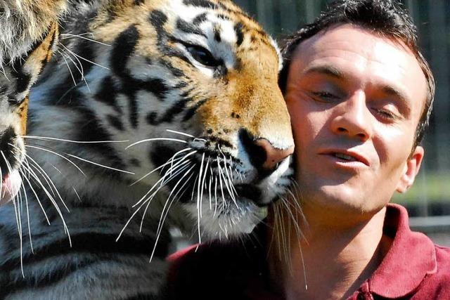 Interview: Dompteur Walliser macht seinen Tigern keinen Vorwurf