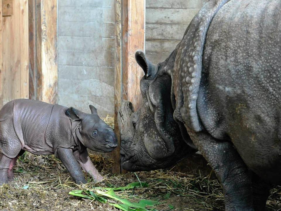 | Foto: Zoo Basel