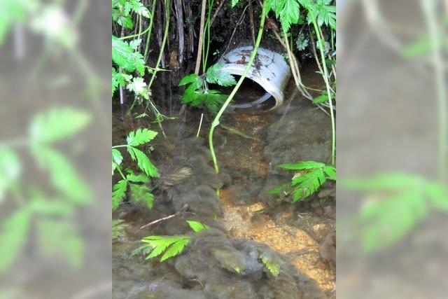 Grünschnitt ließ Abwasserpilz sprießen
