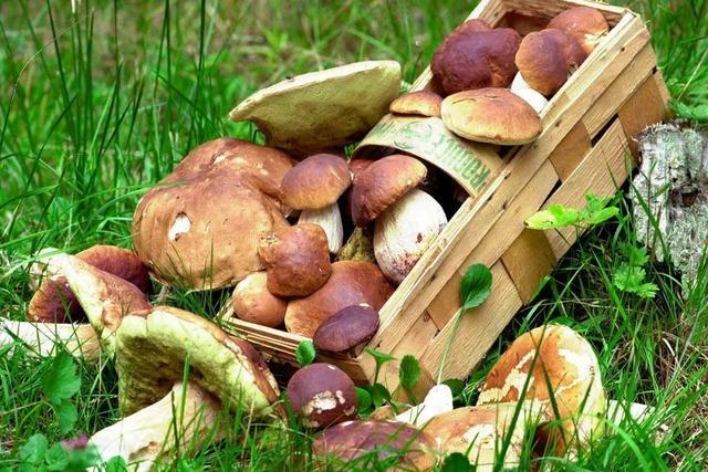 Pilzsuche: Ein Experte über das richtige Verhalten im Wald