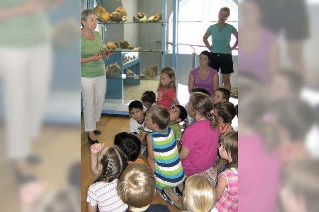 Dinos, Fossilien und ein Museum