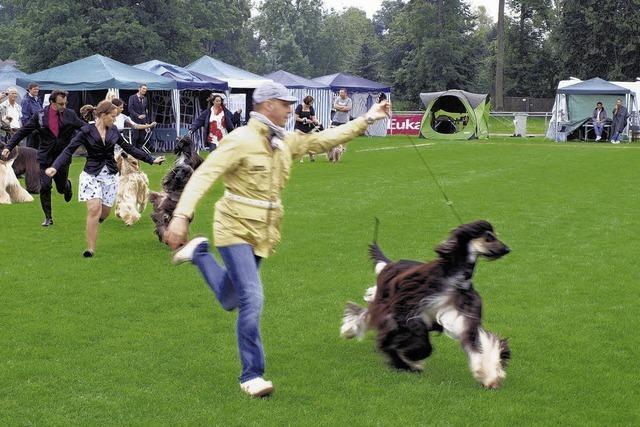 Hundesport vom Feinsten