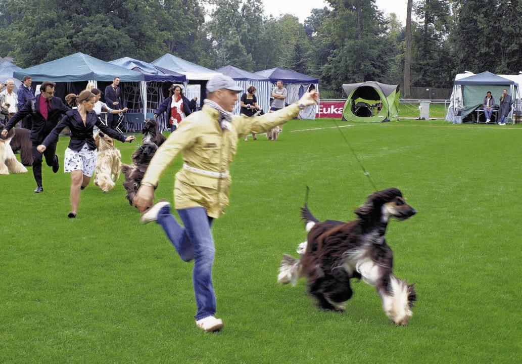 Hund und Halter müssen fit sein &#8211...i den Donaueschinger Windhundtagen.     | Foto: Dorer