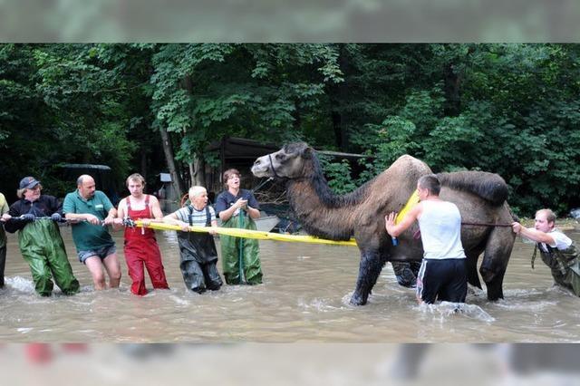 Bad Muskau erwartet Scheitelpunkt des Hochwassers