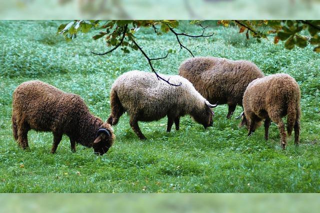 Tierpark Lange Erlen verzichtet auf Exoten