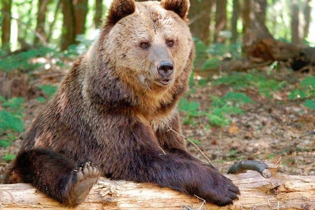 Wie geht es den Löffinger Bären 3 Jahre nach ihrer Rettung?