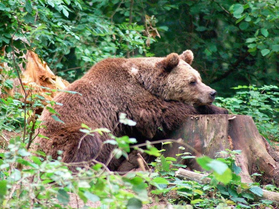 Sindi fühlt sich im Wald in Mecklenburg-Vorpommern sichtlich wohl...    Foto: © VIER PFOTEN