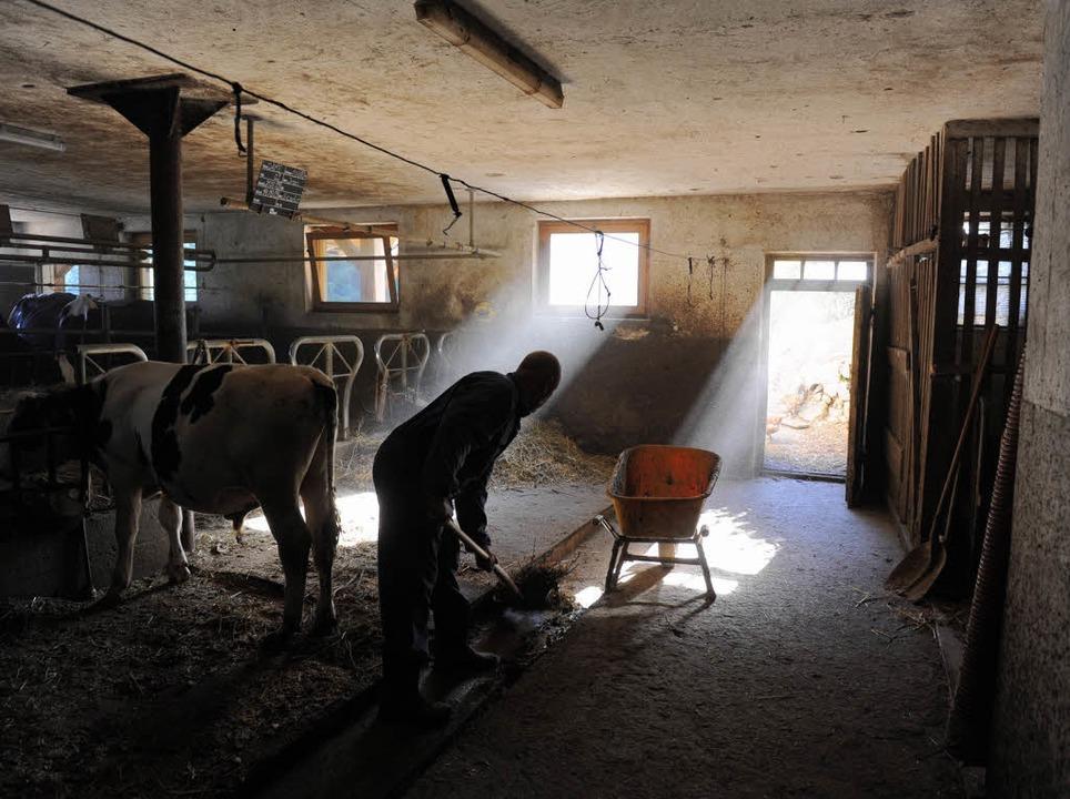 Geht es den Tieren gut, kann auch die Familie von der Milch gut leben.     Foto: Marcel Burkhardt