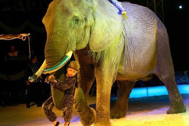 Afrikas Big Circus: Elefant frisst Handtasche