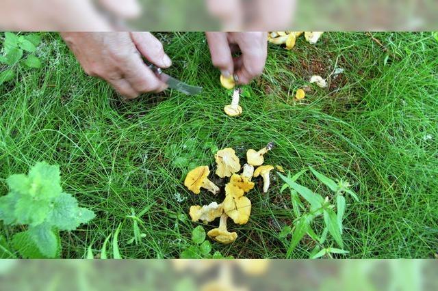 Für Pilze nachts zu kalt