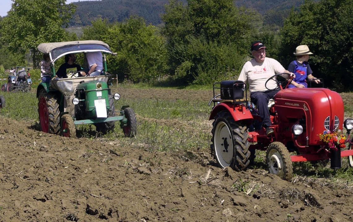 Alt, aber oho – Profis pflügen a...it Oldtimer-Traktoren gerade Furchen.   | Foto: adelbert mutz