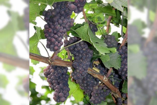 Tuniberger Wein und andere Köstlichkeiten