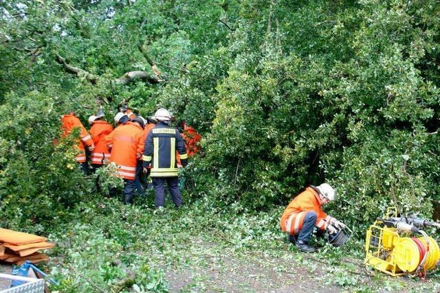 Baum stürzt auf Radlerin und verletzt sie schwer