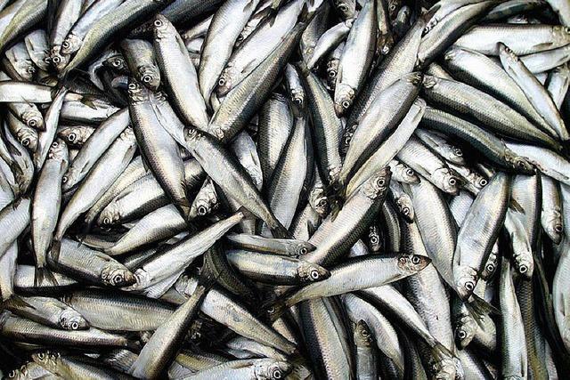 Politik für die Fische