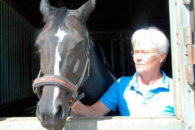 Pferde nachts in Aufregung und verletzt