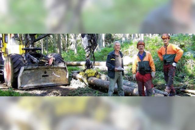 Die Arbeit im Wald rentiert sich wieder