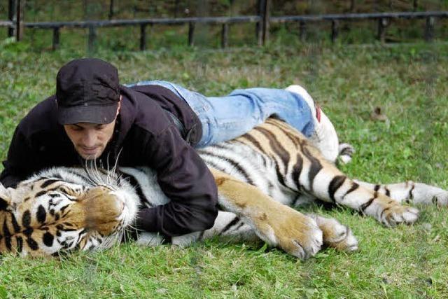 Tiger-Show im Industriegebiet