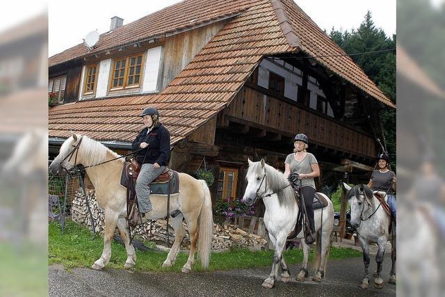Auf dem Pferd durch den Schwarzwald