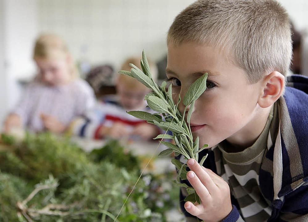 So schmeckt Salbei. Ein Junge riecht b...Kinderferienprogramms an dem Stengel.     Foto: Christoph Breithaupt