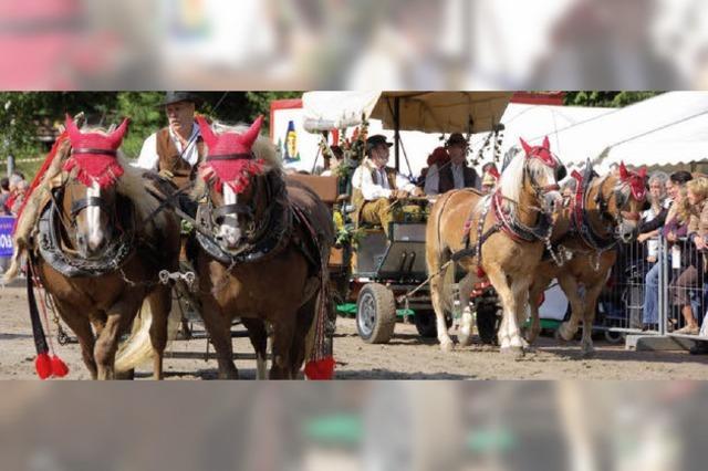 Ein Muss für Pferdefreunde